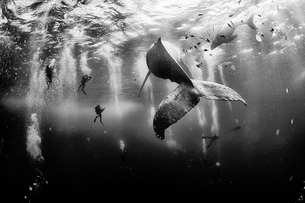 10 кращих фотографій 2015 року за версією National Geographic